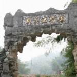 Hunan Bamboos 11