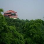 Hunan Bamboos 12