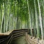 Hunan Bamboos 3